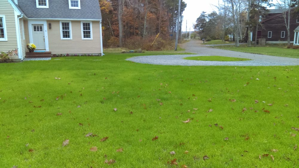 Lawn care ramsdell landscaping wells maine hydroseeded lawn just sprouted solutioingenieria Gallery